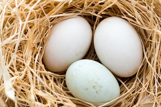 Kacze jaja gniazdo, symbol wiosny wielkanoc.