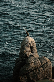 Kaczka stoi na skale na środku morza