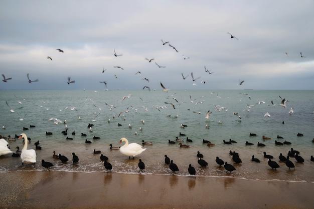 Kaczki, łabędzie i mewy na wybrzeżu
