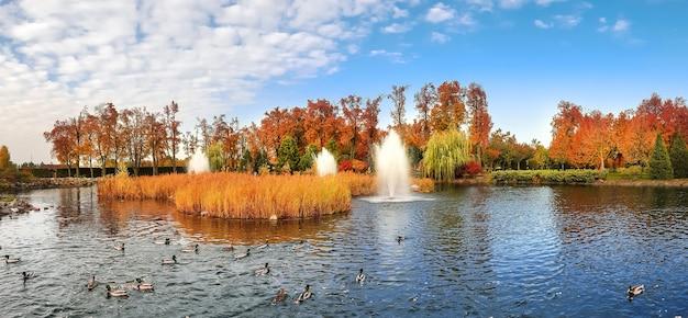 Kaczki pływają w stawie w jesiennym parku.
