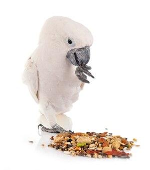 Kakadu białe na białym tle