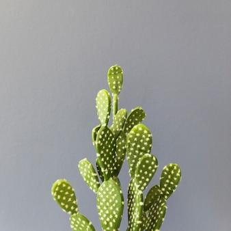 Kaktus biurowy