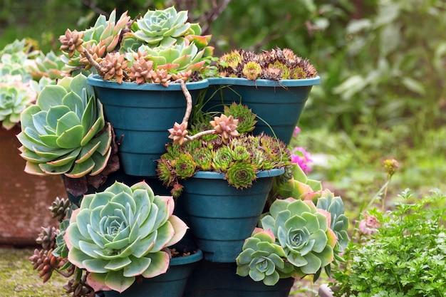 Kaktus i sukulent grupa w garnku plenerowym w ogródzie. śliczna pustynna tropikalna roślina.