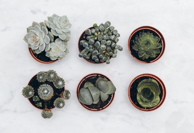 Kaktus i sukulenty ustawione na marmurowym stole. płaskie ułożenie minimalne