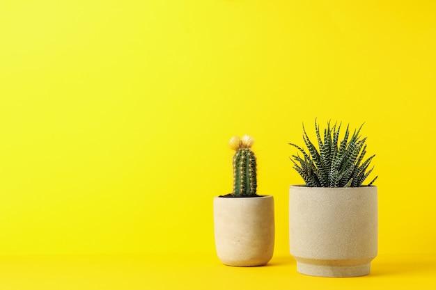 Kaktus i tłustoszowata roślina na żółtym tle, przestrzeń dla teksta