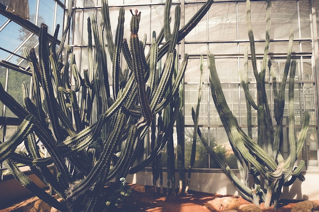 Kaktus lub soczyste z filtrem efekt retro styl vintage