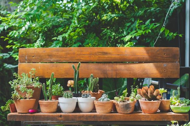 Kaktus na drewnianym krześle w rocznika stylu ogródzie, film tonujący