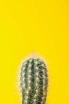 Kaktus na żółtym tle, przestrzeń dla teksta