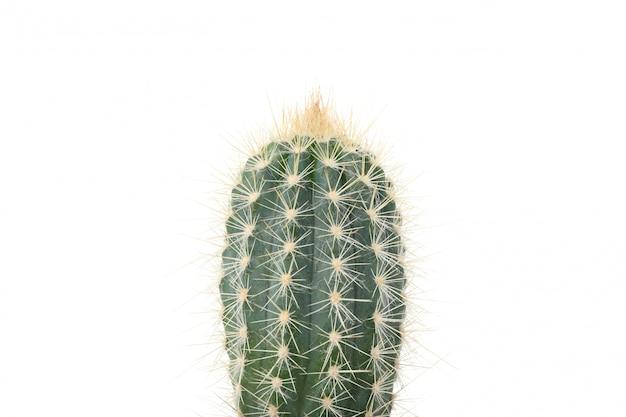 Kaktus odizolowywający na biel powierzchni