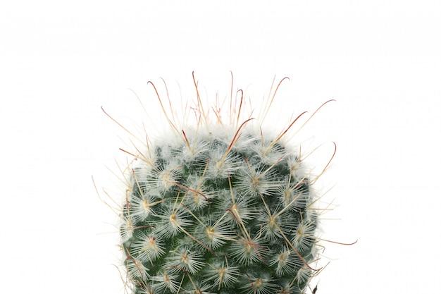 Kaktus odizolowywający, zamyka up