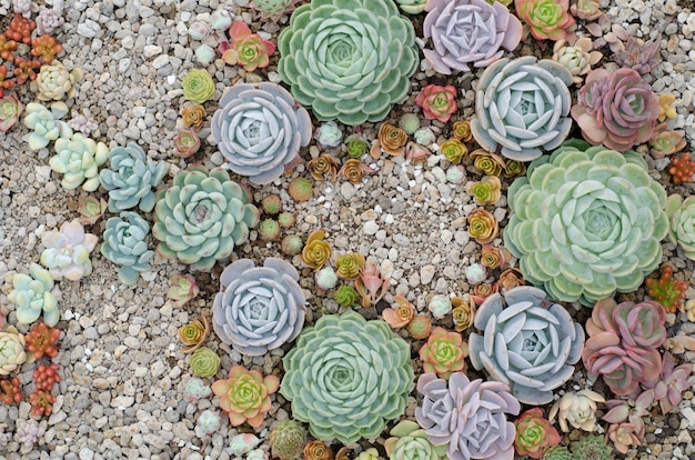 Kaktus rosnące na tle kamienia