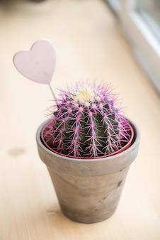 Kaktus stoi na parapetach z sercem