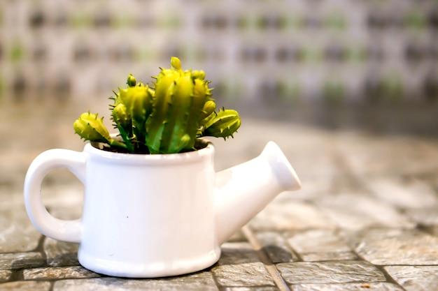 Kaktus w białej dekoracyjnej prysznic ceramicznej wazie