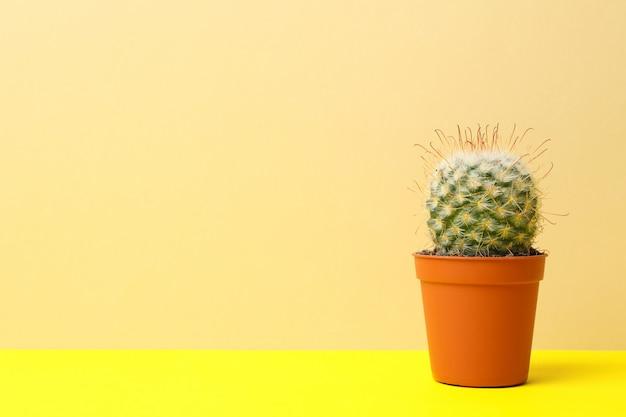 Kaktus w garnku na koloru żółtego stole, przestrzeń dla teksta
