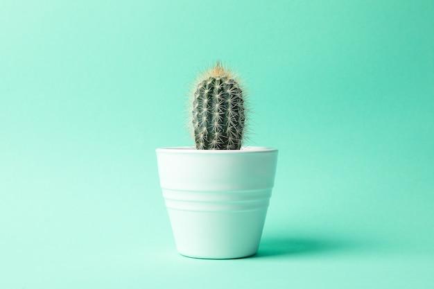 Kaktus w garnku na nowym tle, przestrzeń dla teksta