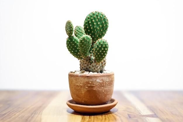Kaktus w glinianym garnku na drewnianym stole