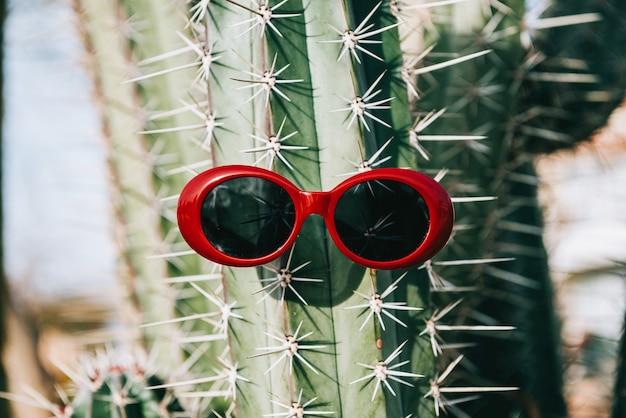 Kaktus w okularach przeciwsłonecznych na lekkim tle