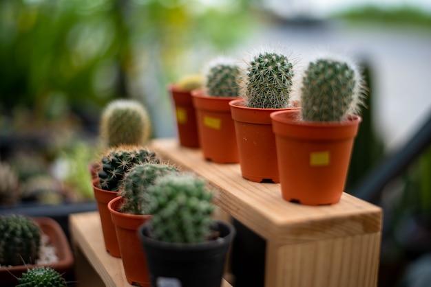 Kaktus w plastikowej doniczce na drewnianej półce.