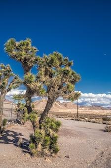 Kaktus w pozostałościach starej kopalni złota, miasto duchów w nevadzie lub kalifornii, dni dzikiego zachodu xix wieku
