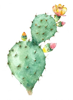 Kaktus w rozkwicie