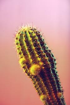Kaktus w tle