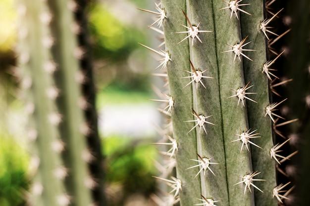 Kaktus z niebezpiecznym kolcem.