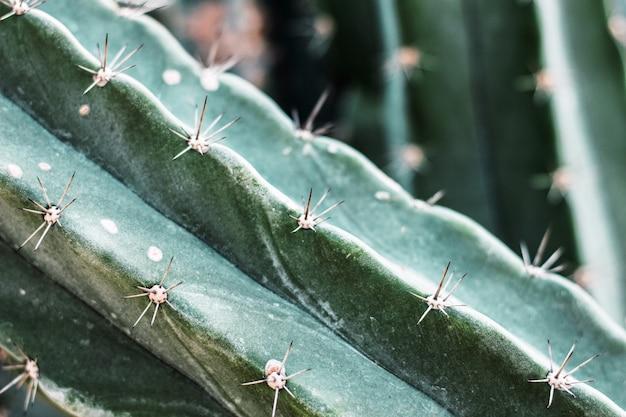 Kaktus z teksturą.