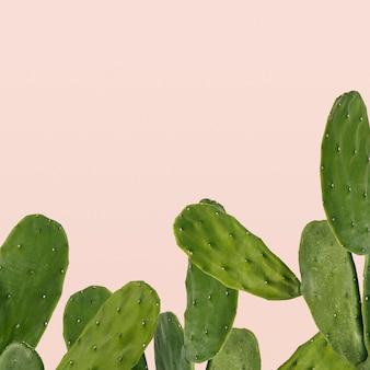 Kaktusowa granica na różowym tle