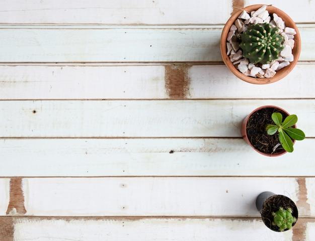 Kaktusowa roślina na glinianym flowerpot nad drewnianym odgórnym tłem