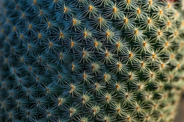 Kaktusowa roślina w parku