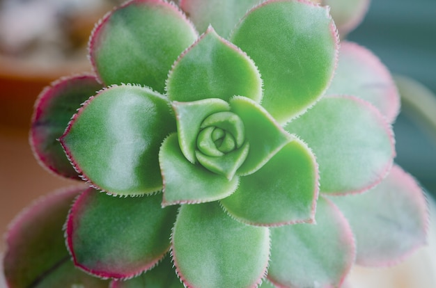 Kaktusowe liście kwiatów