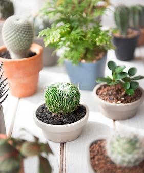 Kaktusowej rośliny drzewnego garnka natury zachowania środowiskowy pojęcie
