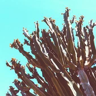 Kaktusowy tło. na dworze. minimalna galeria sztuki