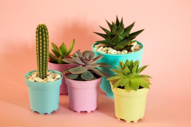 Kaktusy i sukulenty na różowym tle.