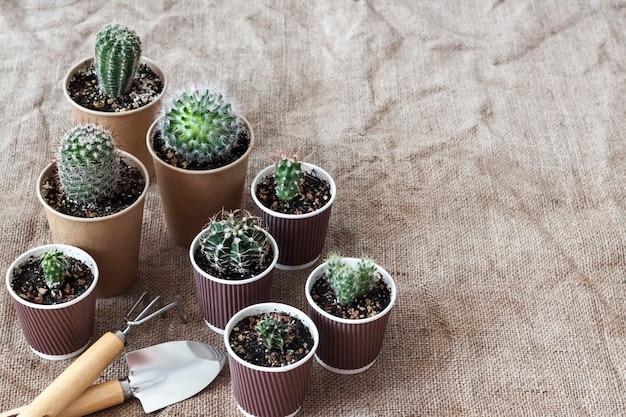 Kaktusy i sukulenty w małych papierowych kubeczkach. dom i ogród. koncepcja ponownego wykorzystania. skopiuj miejsce