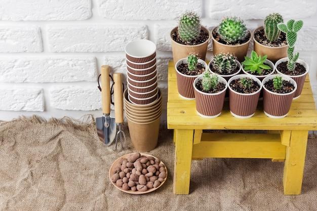 Kaktusy i sukulenty w papierowych kubeczkach na małym żółtym stole koncepcja ponownego wykorzystania ogród w domu