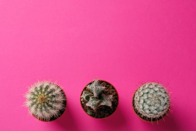 Kaktusy na różowym tle, widok z góry i miejsca na tekst
