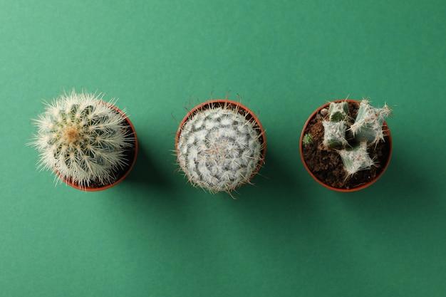 Kaktusy na zielonym tle, odgórny widok. roślina domowa