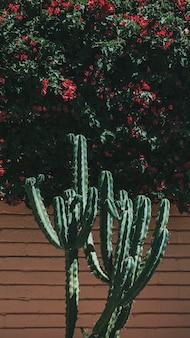 Kaktusy rosnące przy mobilnej tapecie z cegły na ścianę