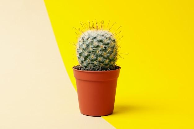 Kaktusy w doniczkach na tle dwóch ton, miejsca na tekst