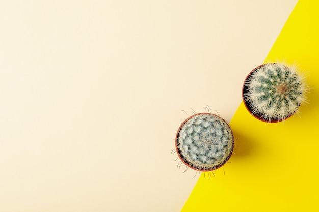 Kaktusy w doniczkach na tle dwóch ton, widok z góry