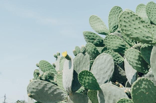 Kaktusy z żółtym kwiatem