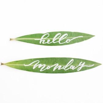 """Kaligraficzne słowa """"hello monday"""" napisane na zielonych liściach"""