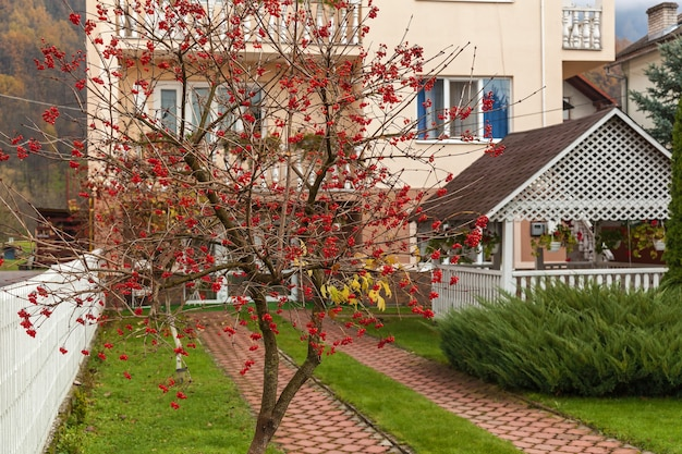 Kalina dom czerwone jagody kalina na tle białego domu czerwone jagody o