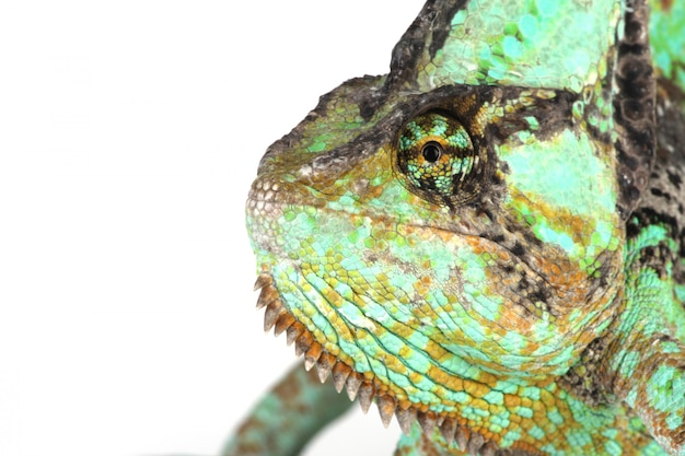 Kameleon głowa z bliska