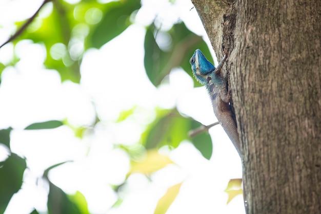 Kameleon, jaszczurka, gatunki kameleona w tropikalnym lesie