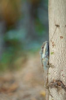 Kameleon na drzewie na plamy tle, pionowo