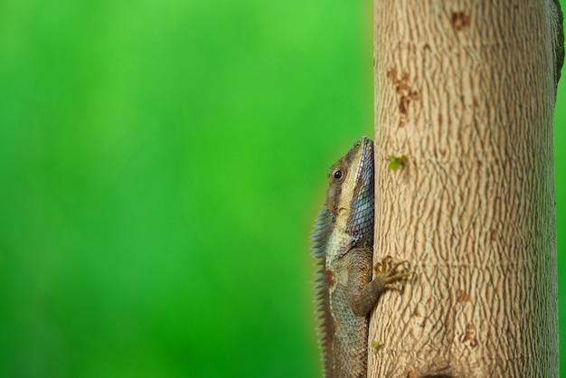 Kameleon na drzewie na plamy tle, zamykającym up