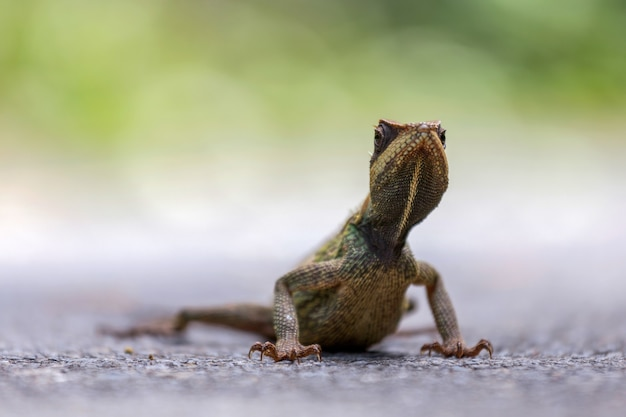Kameleon na ziemi.