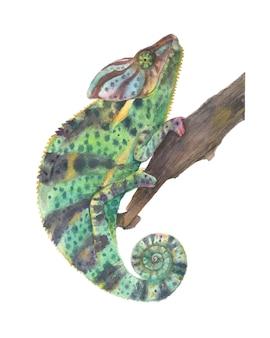 Kameleon panther akwarela ilustracja na białym tle